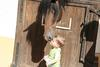 Cavalo de Alter 2 Posted on 1st May,2007  02:07:36 PM Average Rating=6.00